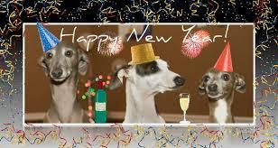new years doggies