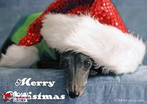 Dog-Christmas-card-s